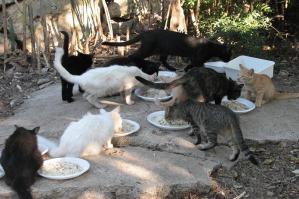 [Colonie feline, il comune di Portogruaro propone un percorso sperimentale per la loro gestione]