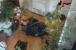 [Piantagione di marijuana in casa, arrestato 25enne residente ad Annone Veneto]