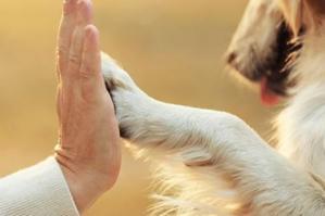 """[Pet Therapy alla Coop. """"Il Gabbiano-Il Pino""""]"""