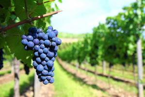 [Business vinicolo del Nord Est: una Summer School a Portogruaro]