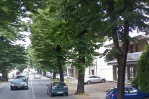 [Portogruaro, via Matteotti: tutela dell'incolumità nel rispetto degli alberi]