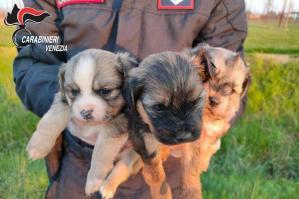 [Pramaggiore: salvati 3 cuccioli di cane abbandonati in una busta della spesa]