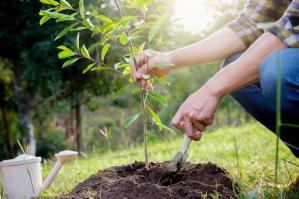 [AlberiAmo: a breve saranno piantati 1700 nuovi alberi nel Veneto orientale]