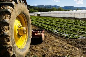 [San Michele: un milione di euro da fondi europei per le imprese agricole ]